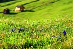 Tyrolean山牧场地 库存图片