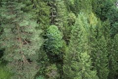 Tyrolean Alps. Forest in the Tyrolean Alps Royalty Free Stock Photography