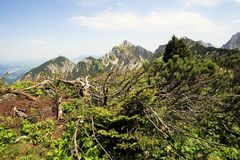 Tyrolean Alps. Forest in the Tyrolean Alps Royalty Free Stock Images