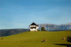 Tyrolean Home – Santa Maddalena, Italy. A picture postcard view of a Tyrolean cottage with cows grazing in the yard, located on a hilltop in northern, Italy Royalty Free Stock Photography