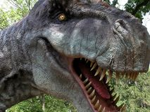 tyrranosaurus rex Стоковое фото RF