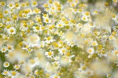 Tysiąc kwiatów w słońcu obrazy royalty free