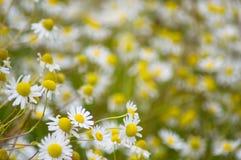 Tysiąc kwiatów w słońcu obraz royalty free
