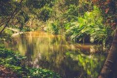 Tysiąc lingas rzecznych angkor banteay Cambodia jeziorni lotuses przeprowadzać żniwa siem srey świątynię Kambodża zdjęcia royalty free