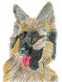 Tysk herde - funktionsduglig hund Arkivfoto