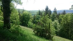 Tysk skog royaltyfri bild