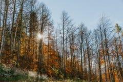 Tysk skog i höst fotografering för bildbyråer