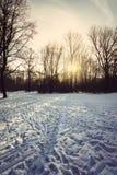 Tysk skog i vinter med snö Bayern, Munich Arkivbild