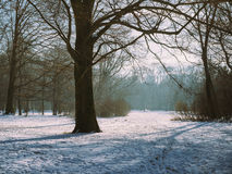 Tysk skog med snö och träd med stilla atmosfär Munich, Arkivfoto