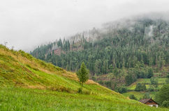 Tyskland Schwarzwald för svart skog Arkivfoto