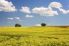 Tyskt åkerbrukt landskap Royaltyfria Foton