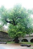 Tyskt träd Royaltyfria Foton
