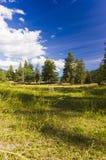 Tyst äng under blå himmel Arkivfoto