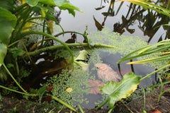 Tyst avkrok av skogsjön Höst i Wicklow, Irland Royaltyfri Foto
