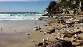Tyst begrundande av den Bondi stranden, Sydney, Australien lager videofilmer