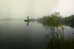 Tyst dimmig dag i vårskog ovanför floden Arkivfoto
