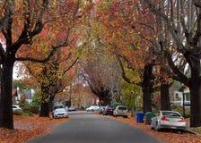 Tyst gata för bostads- förort som skräpas ner med sidor från högväxta träd Arkivbild