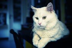 Tyst katt på tabellen arkivbilder