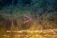 Tyst Lake Royaltyfri Foto