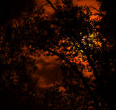 Tyst midnatt Royaltyfria Bilder