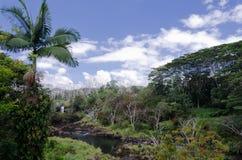 Tyst morgon i Wailuku floddelstatspark Arkivbilder