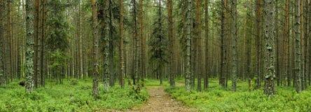 tyst skog Royaltyfri Bild