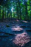 tyst skog Fotografering för Bildbyråer