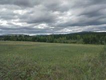 tyst skog Arkivfoton