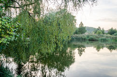 Tyst skogsjö med alger som omges av träd, buskar och vasser Arkivbilder
