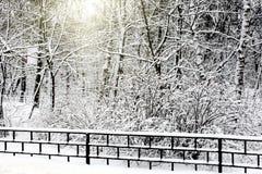 Tyst snow-covered stads- park Royaltyfria Foton