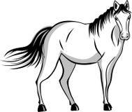 Tyst stående häst Arkivfoton