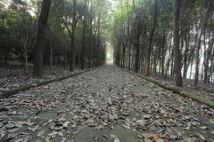 Tyst väg som täckas med sidor, i den mörka skogen i vinter Royaltyfria Bilder