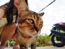 Tysta ned av en brun inhemsk katt Katten ser upp N?rbild f?r framsida f?r katt` s Ett husdjur i natur arkivfoton