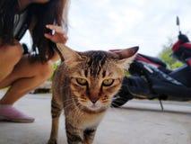 Tysta ned av en brun inhemsk katt Katten ser upp N?rbild f?r framsida f?r katt` s Ett husdjur i natur royaltyfria bilder