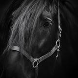 Tysta ned av en häst. Arkivbild