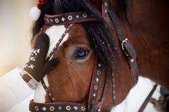 Tysta ned av en häst i en sele royaltyfri fotografi