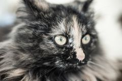 Tysta ned av en lurvig fet kattn?rbild med en suddig bakgrund royaltyfri fotografi
