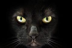 Tysta ned av en svart katt Arkivfoton