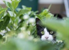 Tysta ned av ett kattsammanträde på en säng Royaltyfri Foto