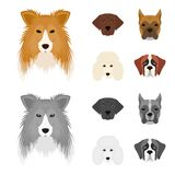 Tysta ned av olika avel av hundkapplöpning Collieavelhund, lobladore, pudel, fastställda samlingssymboler för boxare i tecknade f stock illustrationer