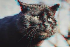 Tysta ned den svarta katten i tekniskt feleffekt arkivfoton