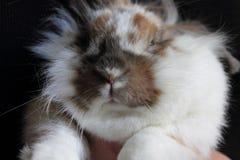 Tysta ned kanin Royaltyfria Bilder