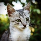 Tysta ned kattungecloseupen Arkivfoton