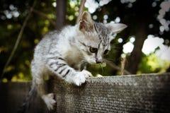 Tysta ned kattungecloseupen Royaltyfri Bild