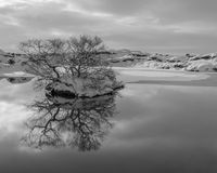 Tysta reflexioner i kalla vattnet Royaltyfria Bilder