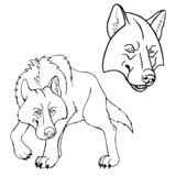 Tystar ned oavkortad tillväxt för vargen och separat arkivbilder
