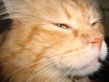 Tystar ned sluga cat's feline Katter fotografering för bildbyråer