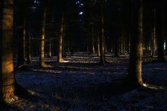 Tystnad i skogen på soluppgång i Februari Royaltyfri Bild