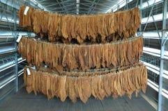 Tytoni liście Zdjęcia Stock
