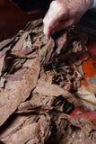 Tytoni liście dla cygar Zdjęcie Stock
